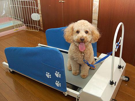 treadmill lifespan review