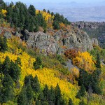 Top 3 Best Forests To Observe Autumn